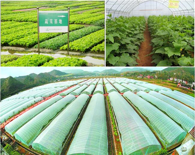 水车田蔬菜基地