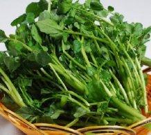 长沙蔬菜亚博体育app苹果下载地址之西洋菜