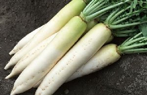 长沙蔬菜亚博体育app苹果下载地址之白萝卜